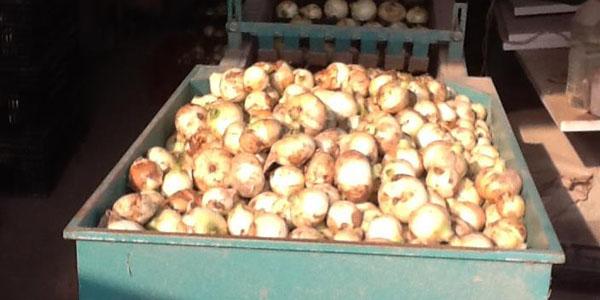 玉ねぎを一箇所に集めます。