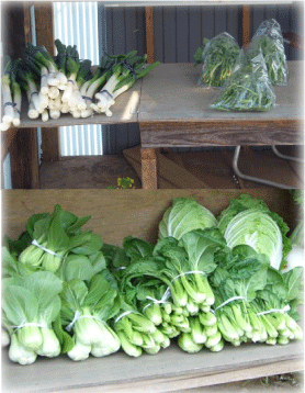 無人野菜販売所